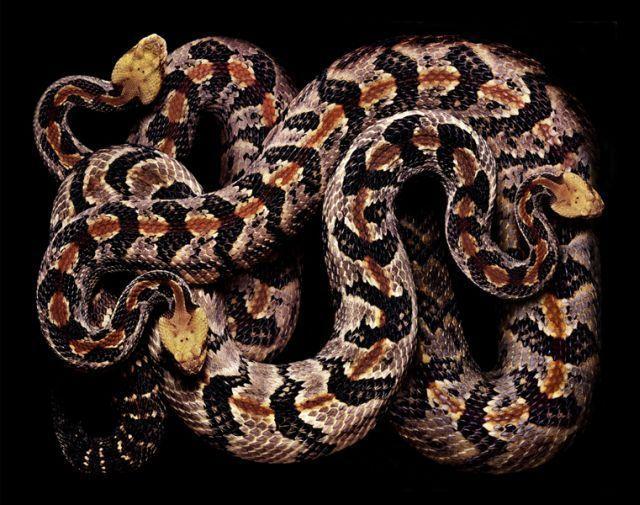 snake_art_11