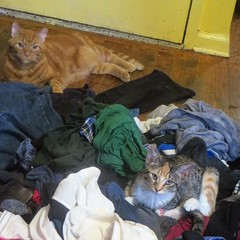 Laundry Pile Cats