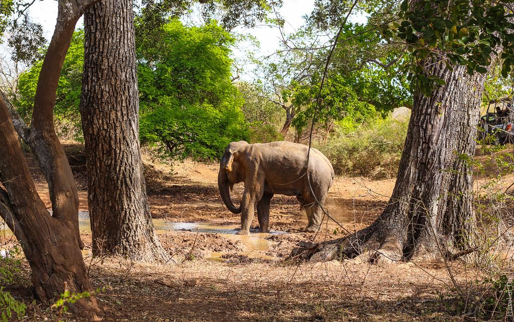 25.06-Yala-National-Park-Sri-Lanka-canon-1500px-039