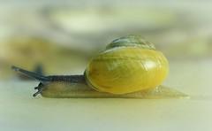 Snail Studies - They call him 'Lightning'...