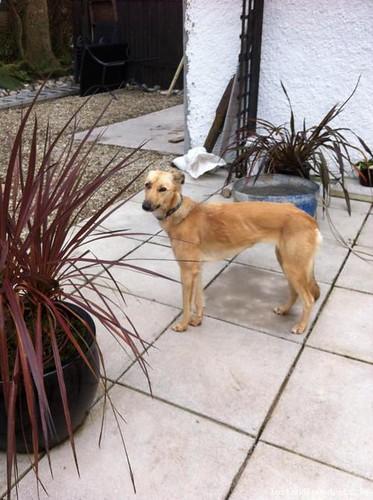 [Finder Keeping Pet] Wed, Oct 18th, 2017 Found Female Dog - Nr Kilmore Village, Ballyhealy Beach, Wexford