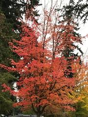 Fall in Seattle.