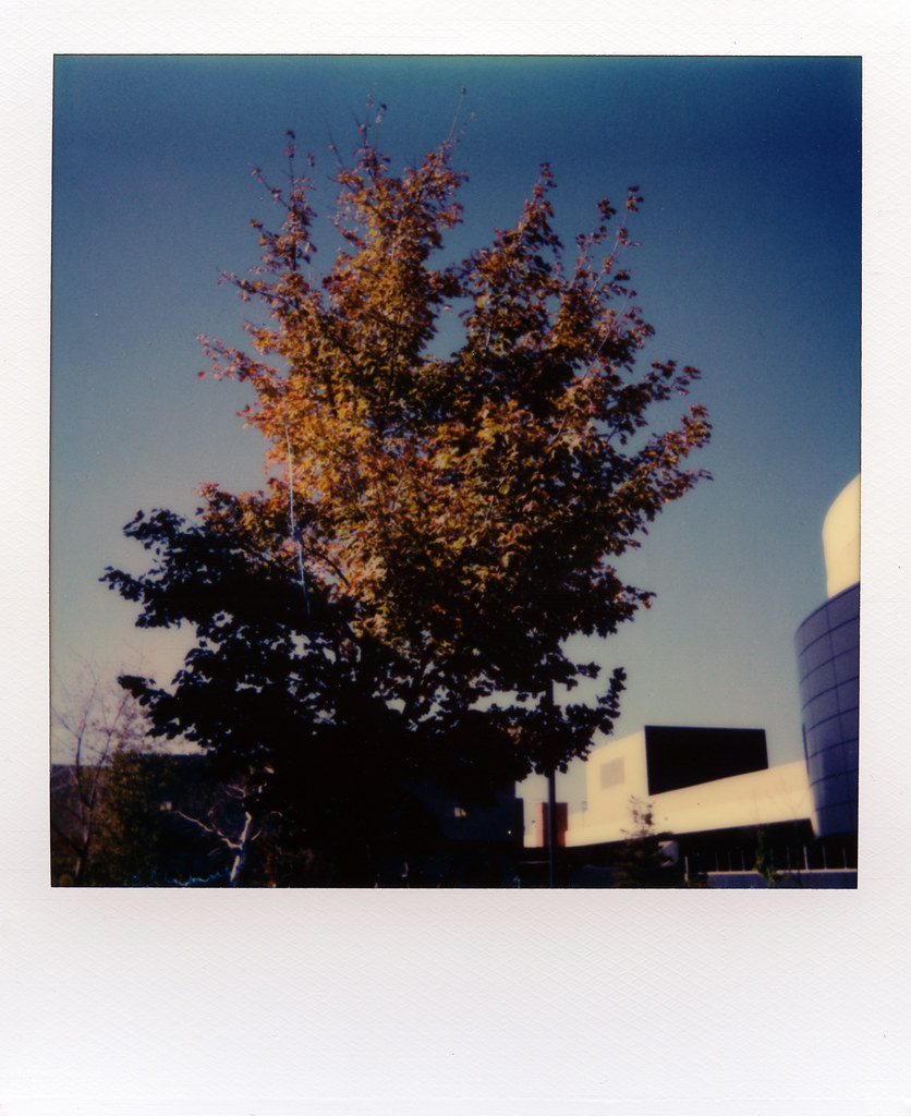 Polaroid Week - Fall 2017