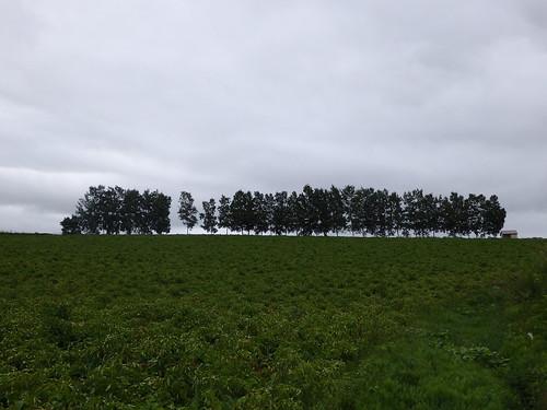 セブンスターの木の隣の木