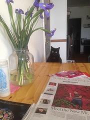 Listener Constant S's cat Leeds