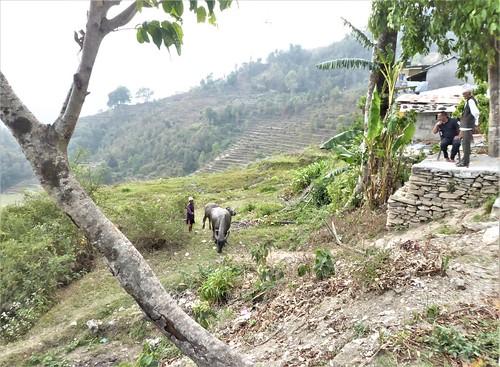 n-pokhara-Pagode-Paix-descente (11)