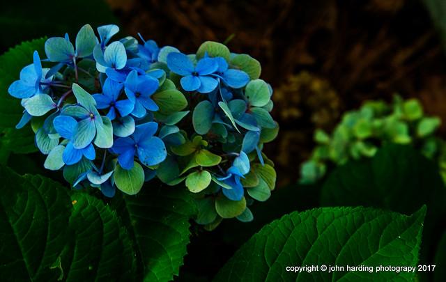 Greening Blues