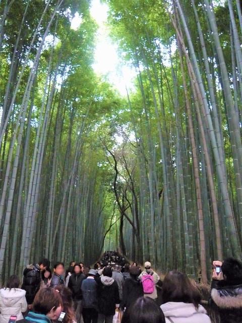 arashiyama08016