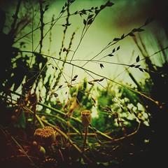 Snapseed, Mextures - Photo of Gressey