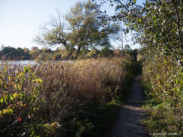 Path, by the river