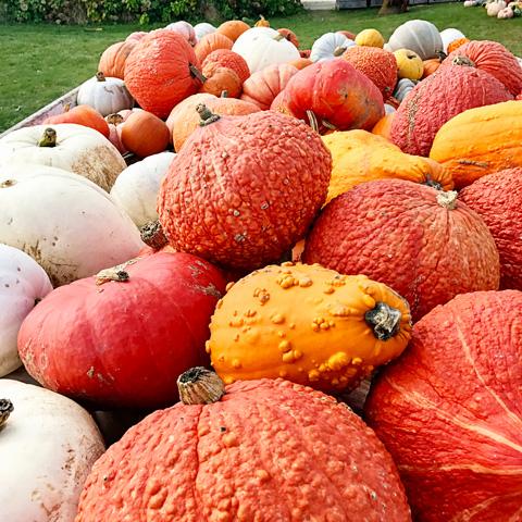 pumpkinfarm6-1017