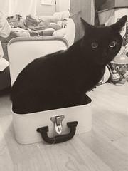 If I fits, I sits.