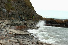 The Cove in Bray
