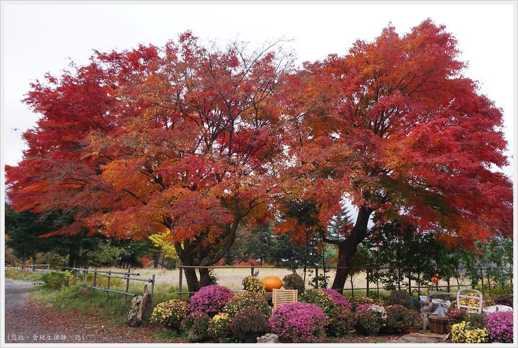 紅葉迴廊-久保田一竹美術館-3