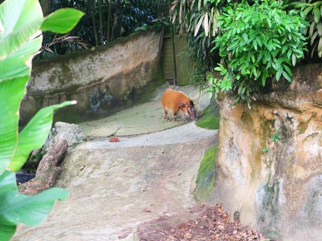 zoo singapore Gradini si Parcuri din Singapore 3