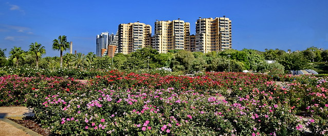 Living in a Rose Garden