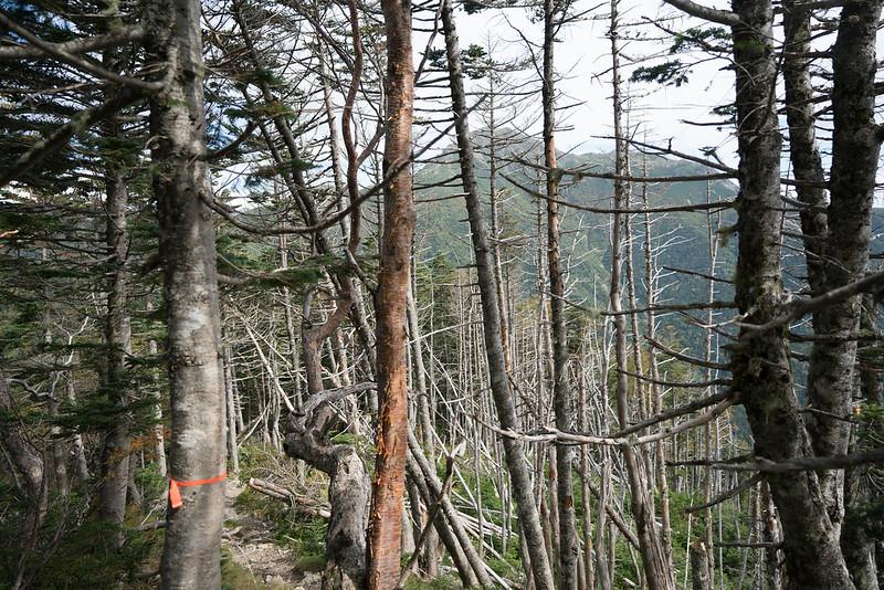 20170924-塩見岳_0155.jpg