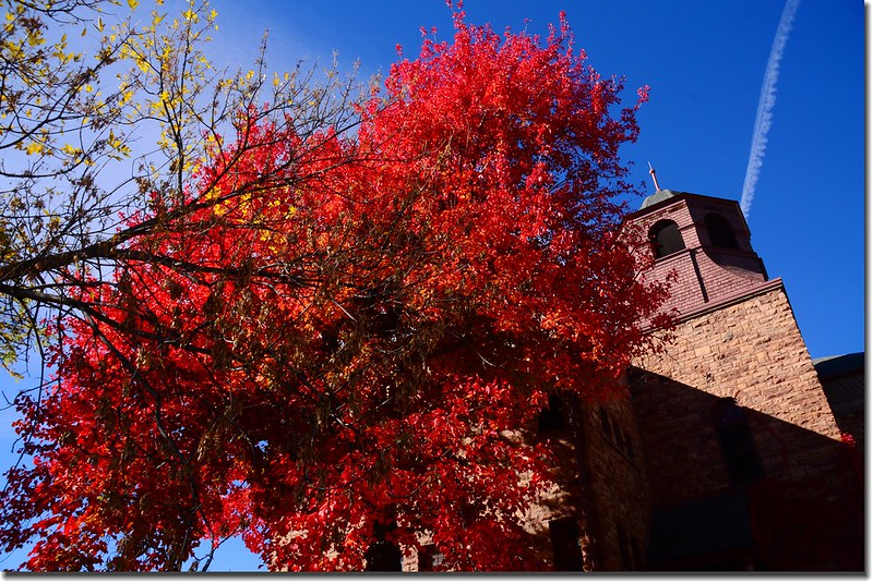 2017 Maple in Fall, Boulder, Colorado  (37)