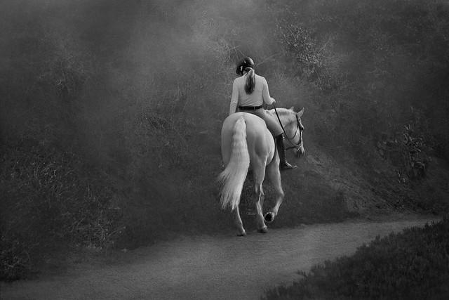 Horses make a landscape look beautiful