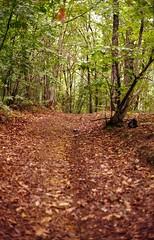 Nel mio bosco al Garetto