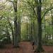 Long Wood, Claverton Down