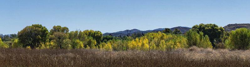 Willow Lake, Prescott, Fall Color