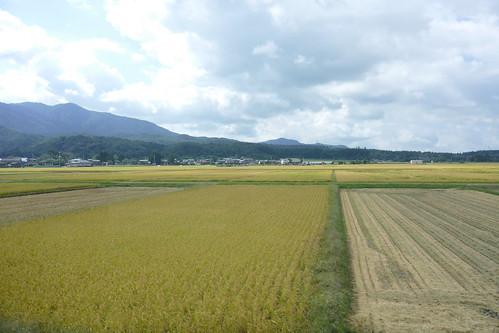 米坂線 yonesakaline 車窓 window 田 paddy 新潟県村上市 murakaminiigata