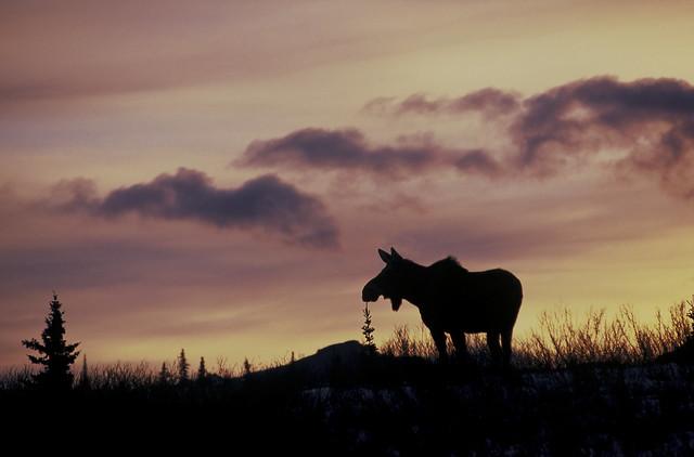 Autumn Sunset of the north   #0000737