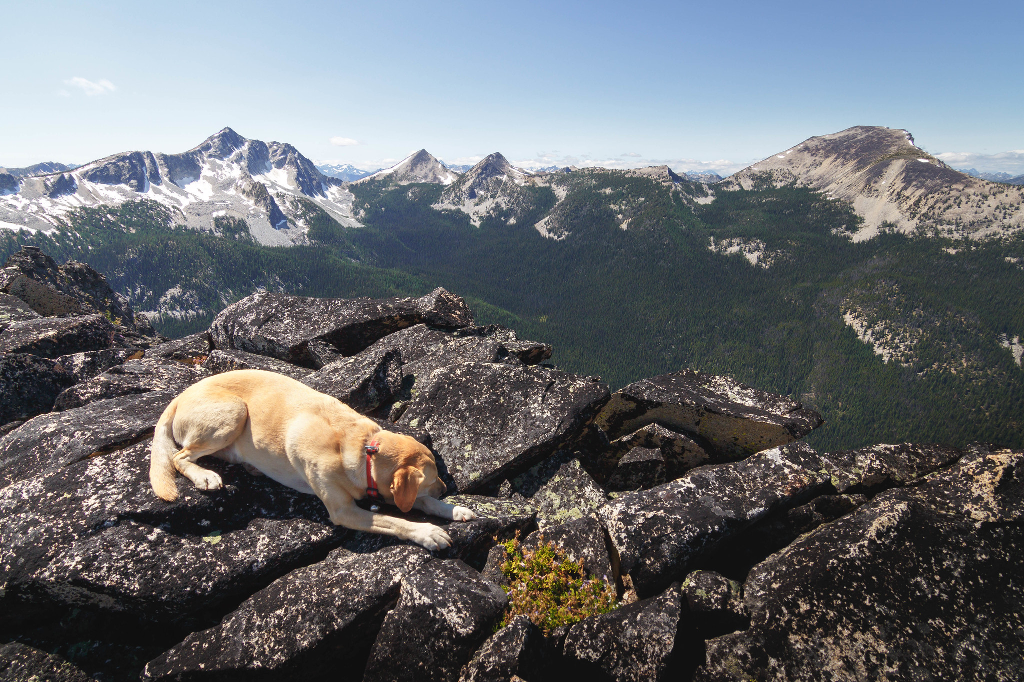 Summit dogs on Spirit Mountain