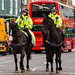 Northumbria Police Mounted Section.