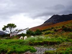 Loch Brittle, Nr Glenbrittle Campsite, Skye, Scotland 2017 (37)