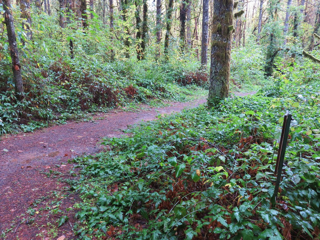Inter-Tie Trail junction with the Woodpecker Loop Trail