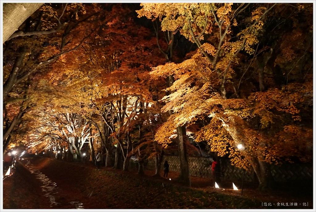 紅葉迴廊-紅葉祭-夜楓-31