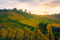 Stuttgart Grabkapelle Morning Sunrise Field Vineyard Winery Landscape European German Destination Beautiful
