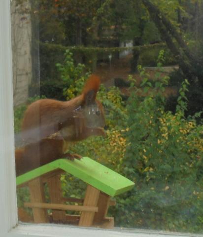 Thronendes Eichhörnchen