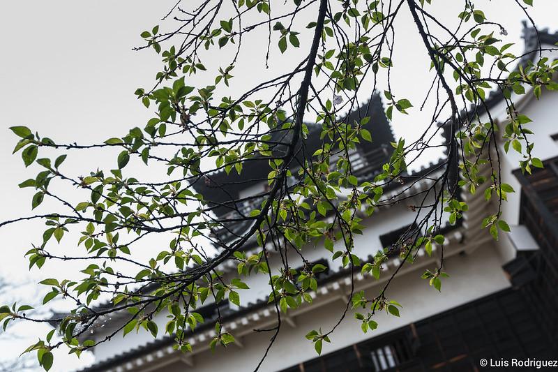 Inuyama-castillo-66