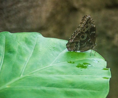 On A Wet Leaf