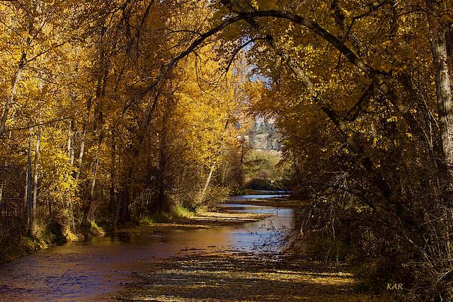 Fall from Casorso Bridge