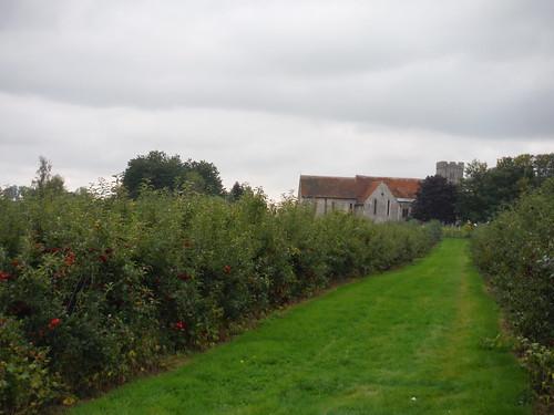 St. Mary's Church, Teynham Street, through an orchard