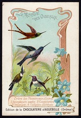 French Tradecard - Humming Birds