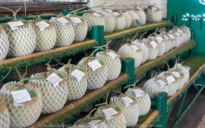 Bann Melon