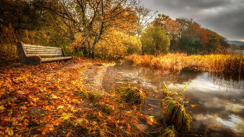 Autumn gold...