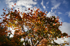 Botanic Gardens Edinburgh Oct 2017 -106