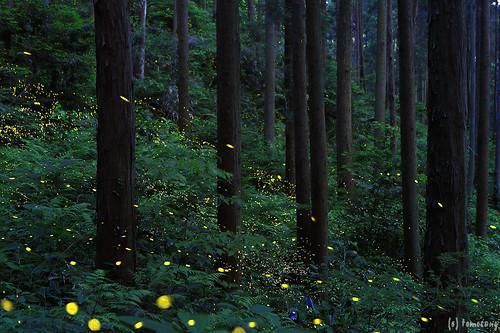Firefly 2017 (Kurate)