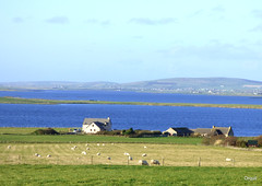 Houses By Two Large West Mainland Lochs