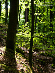 Oberbronn Ungerthal - Photo of Uhrwiller
