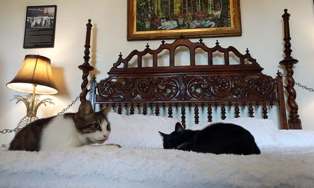 hemingway-bedroom-cats