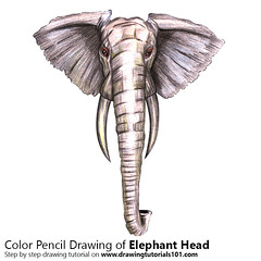 Elephant Head with Color Pencils [Time Lapse]