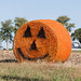 Great Hay Pumpkin