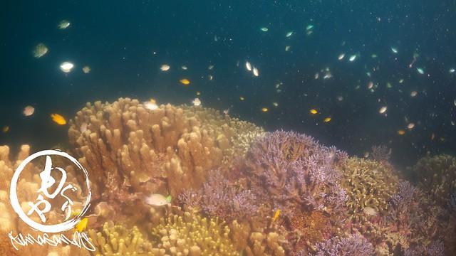 最近のお気に入りポイント。極上サンゴゾーン♪